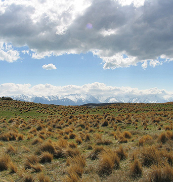 Rolling landscape of tussock and snow grass with snowcapped mountains in the distance.